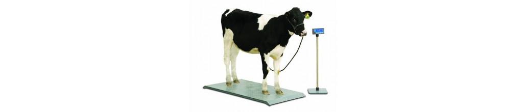 balance pour animaux